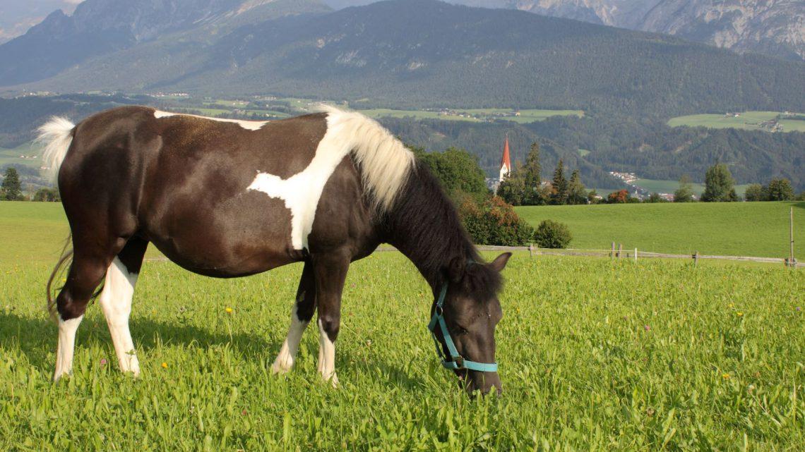 Pferd hat Schmerzen und lahmt