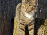 Katze zeigt auffälliges Verhalten